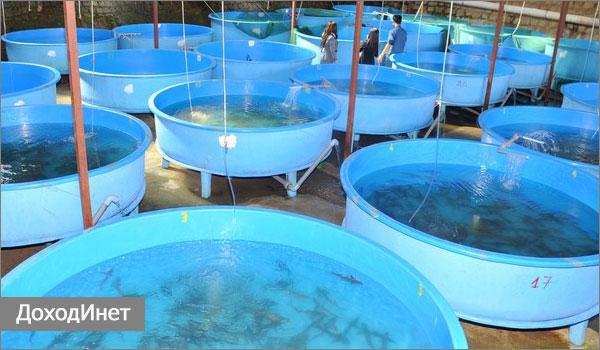 Разведение рыбы в домашних условиях