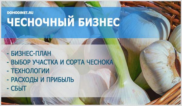 Выращивание чеснока как бизнес рентабельность и технологии